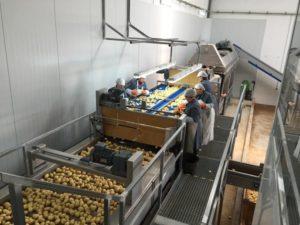 Aardappels Aardappelen Sorteren